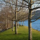 trees at the marina by travis manley