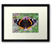 Red Admiral Butterfly Framed Print