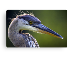Great Blue Heron Head Shot Canvas Print