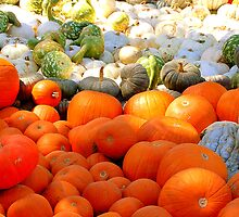 Field of Pumpkins & Gourds by Brandon Marshall