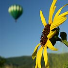 Balloon & Sunflower by cshphotos