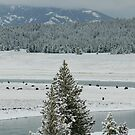 Yellowstone National Park by cshphotos