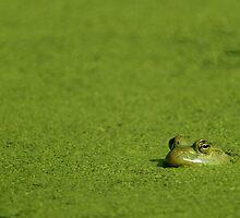 Bullfrog and Algae by Michael Mill