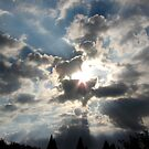 Wild Sky by Trace Lowe