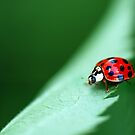 Ladybug Lane by Bonnie T.  Barry