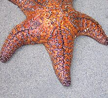 my starfish by michael griffith