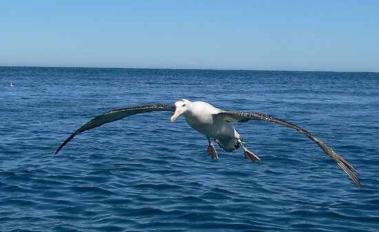 Coming In For A Landing by Larry Lingard-Davis