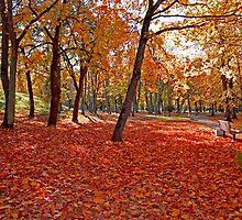 Autumn in the park by marinailasova