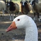 Goose and Friends by Susy Rushing