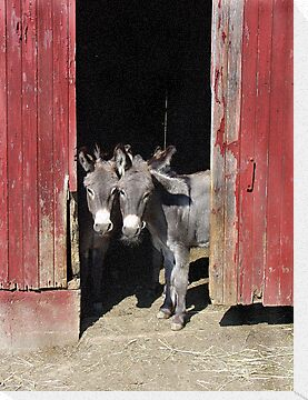 Donkeys by Susy Rushing