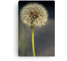 Seeded Dandelion Canvas Print
