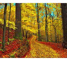 Seldom used road Photographic Print