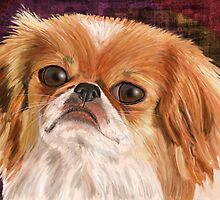 Cute Pekingese with white /orange brown coat by ibadishi