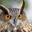 Eagle Owl by grandaded
