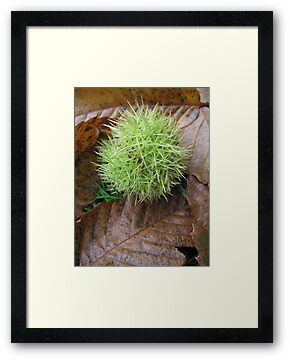 Sweet Chestnut by Sara Wiggins