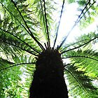 Tree Fern by Sara Wiggins