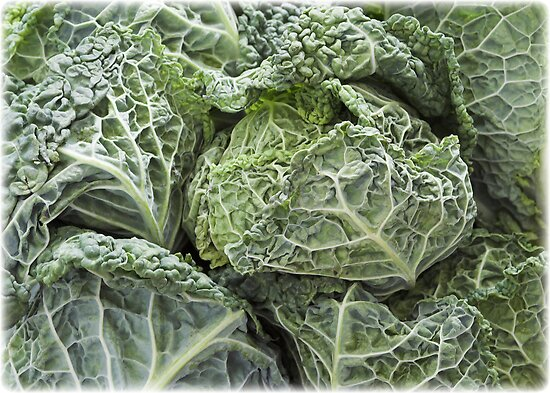 Savoy Cabbages by grandaded