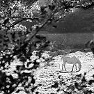 Sunlit horse by Orla Flanagan