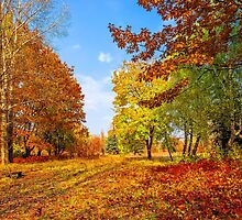 Autumn colors of nature by Serhii Simonov