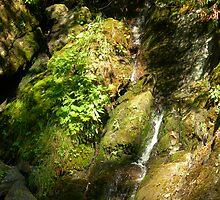 Majestic Stream by Katie Davis