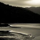 Solitary Gull by Ben Farrell