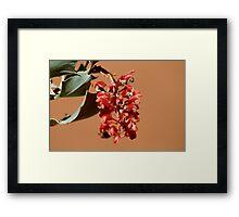 Holly Grevillea Framed Print