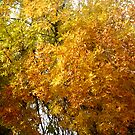 Autumn Colors by coleen gudbranson