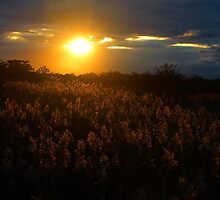 Golden Sunset | Fire Island, New York by © Sophie W. Smith