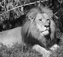 King Of The Jungle by Leanne Allen