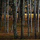Through the Woods, Darkly by cclaude