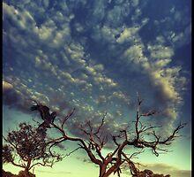 Dead tree by Federico Colalongo