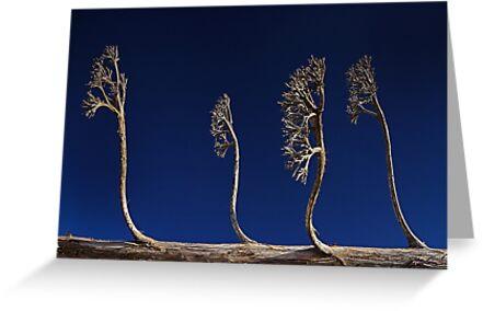 Alien Trees by Peter Daalder