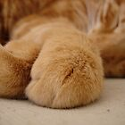 My paw is softer than yours by Melanie PATRICK