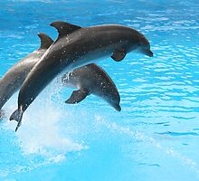 Dolphins by magicalphotos