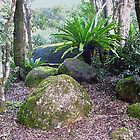 Rain Forest Magic - Lamington National Park by Margaret Stevens