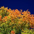 Splendor Of Fall  by Gary L   Suddath