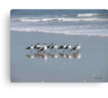 The Gull Gang Canvas Print
