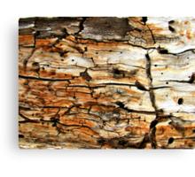 Fractured Bark Art Canvas Print