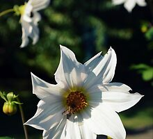 White Flowers by mouchette111