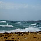 surfs up by garyt581