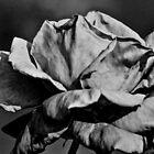 Black rose by Kornrawiee