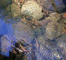 Water by Shara