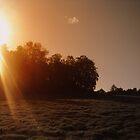 Sun over the trees by Kodak