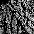 Tree Trunk by David Elliott