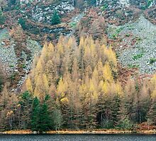 Lakeside in Autumn by Nick Jenkins