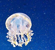Lagoon Jelly in the Light by Ryan Deis