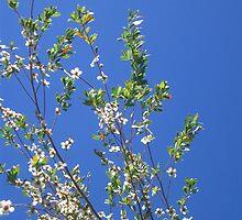 Native Blossom by Shara