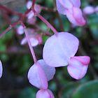 pink  geranium by ginny