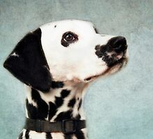 Dalmatian by lucyliu