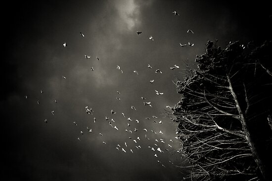 The Birds by Corey  Brown